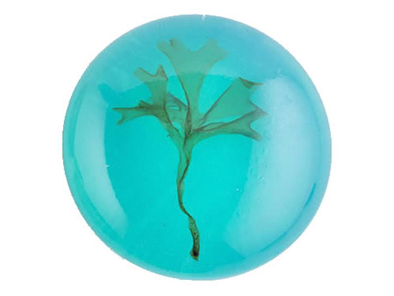 savon rond bleu transparent algues santemer